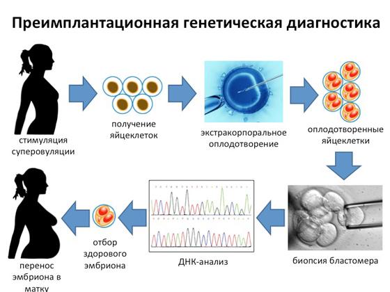 Генетический анализ эмбриона при эко